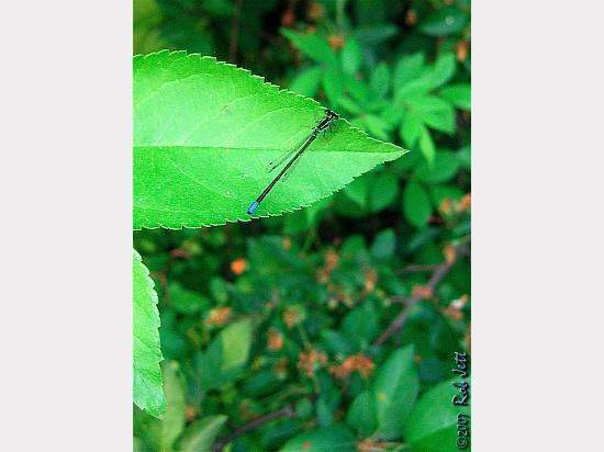img_0038-edited_watermark